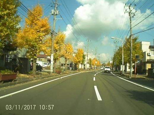 銀杏並木1