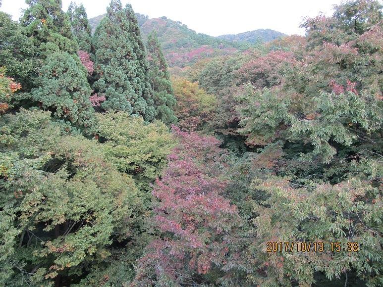 尼子川紅葉1