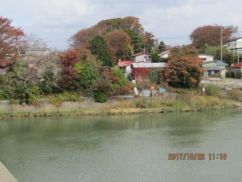 川べりの紅葉