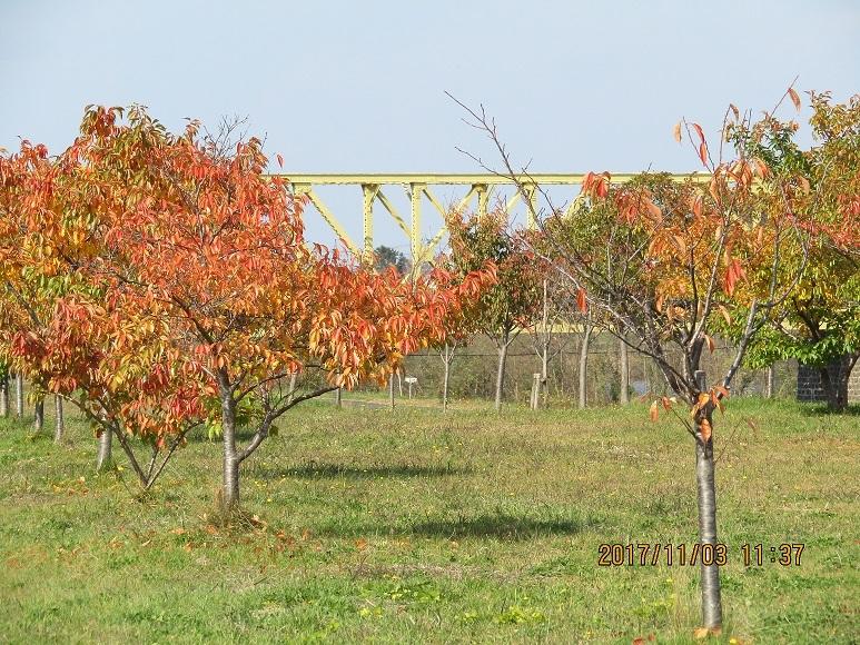 鉄橋と紅葉