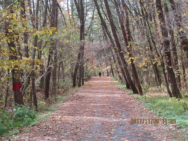 林の中を走る