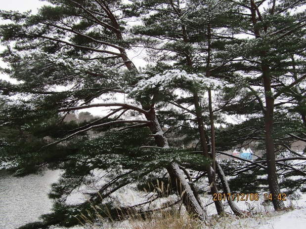 松葉雪、水