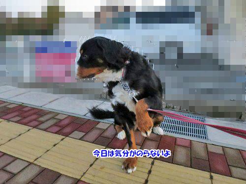 1IMG_8016.jpg