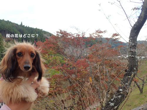 harutoaki15.jpg