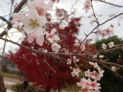 harutoaki29.jpg