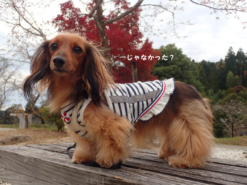 harutoaki36.jpg