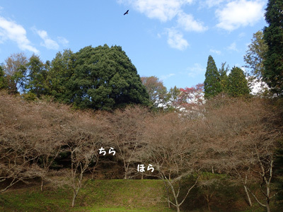 harutoaki87.jpg