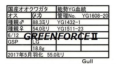 Gull1608205500.jpg