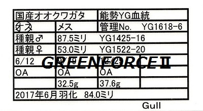 Gull1618068400.jpg