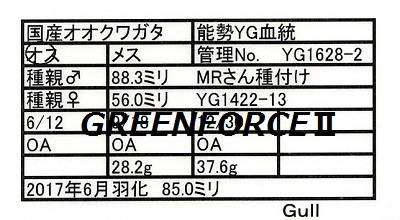 Gull1628028500.jpg
