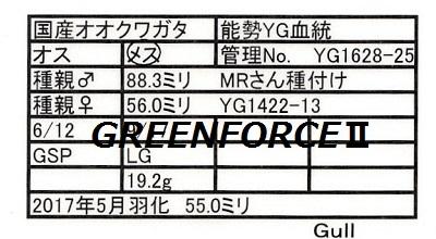 Gull1628255500.jpg