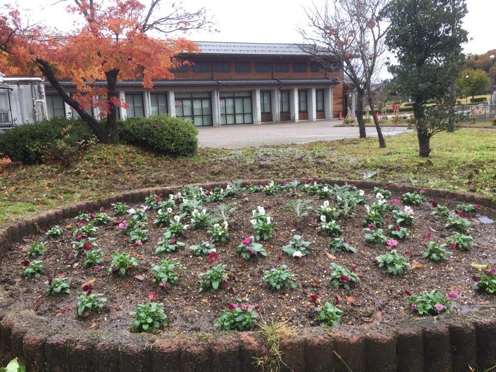 201711カモミール花壇02