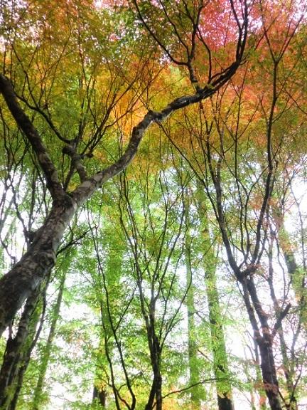 CIMG4201-1.jpg