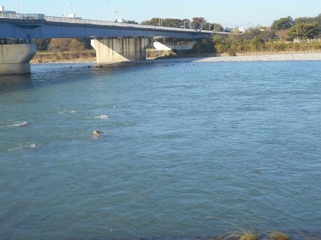 DSCN33491106大渡橋.jpg