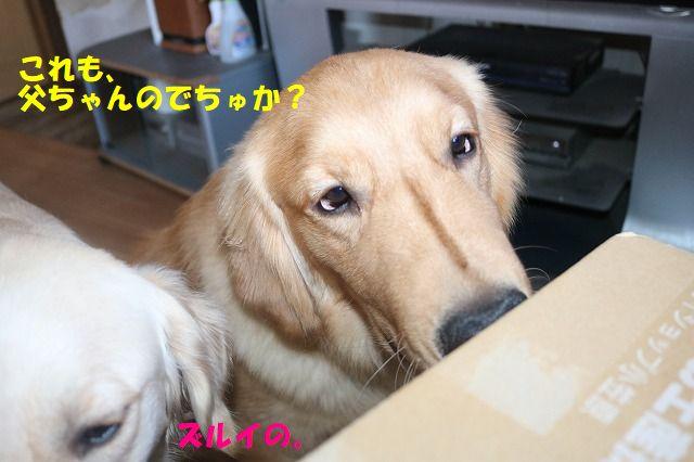 IMG_0157_20171111194718c52.jpg