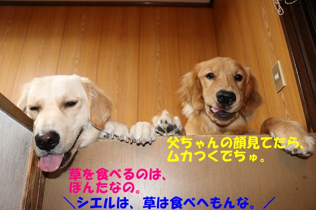 IMG_0371.jpg