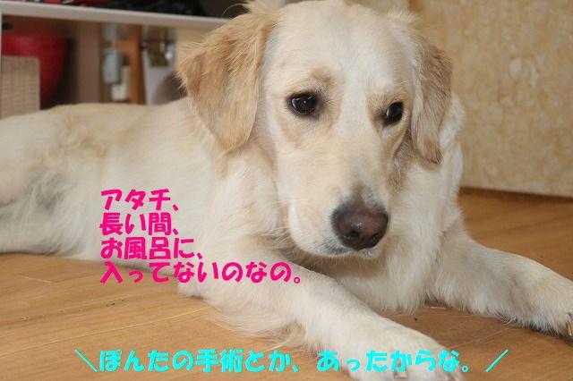 IMG_0393_20171118225903bcf.jpg