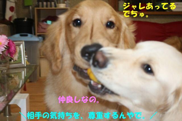 IMG_0415_20171120233603974.jpg