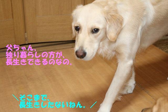 IMG_0434.jpg