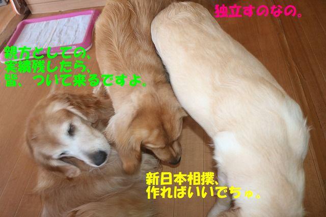 IMG_0516_20171123132722810.jpg