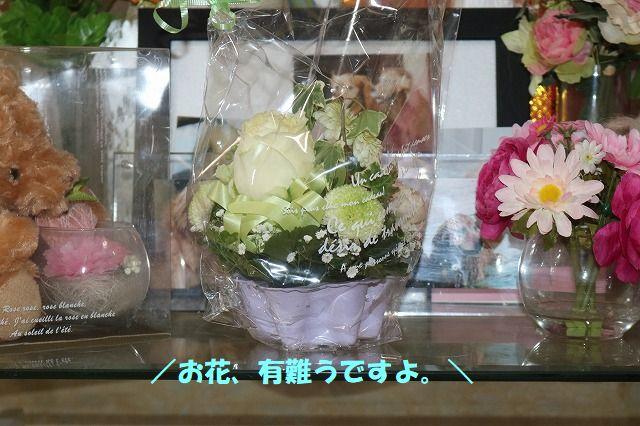IMG_0533.jpg