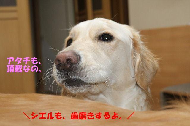 IMG_0936_20171227235206d77.jpg