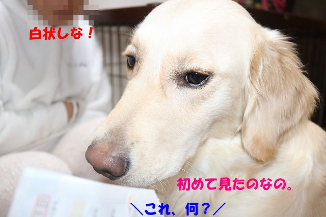IMG_0a745.jpg