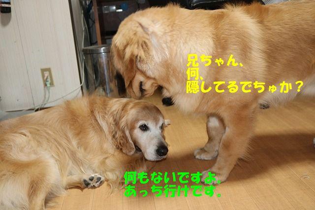 IMG_9247_20171016222649397.jpg