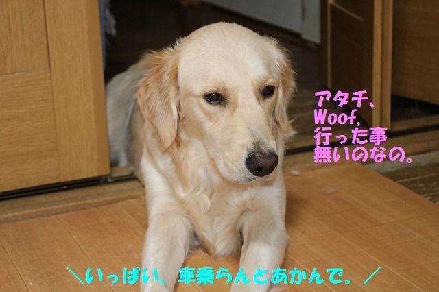IMG_9497.jpg