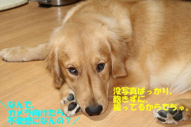 IMG_9558.jpg