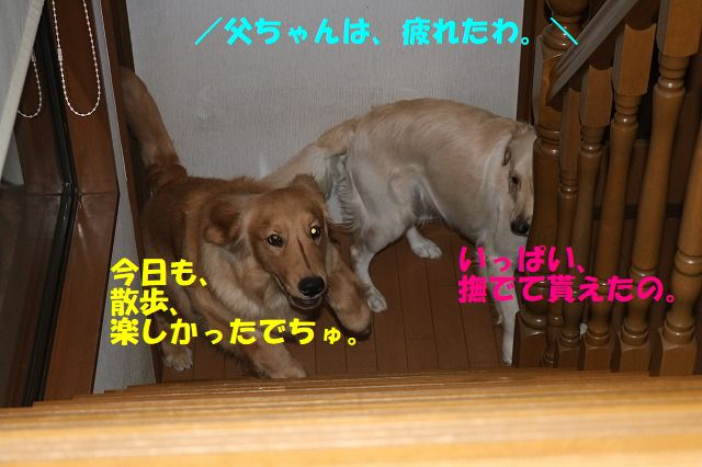 IMG_9591.jpg