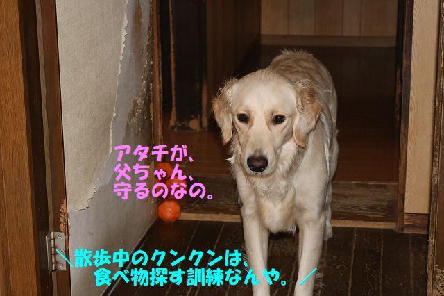 IMG_9615_20171030225202d08.jpg