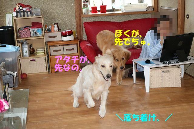 IMG_9671_20171029235936b58.jpg