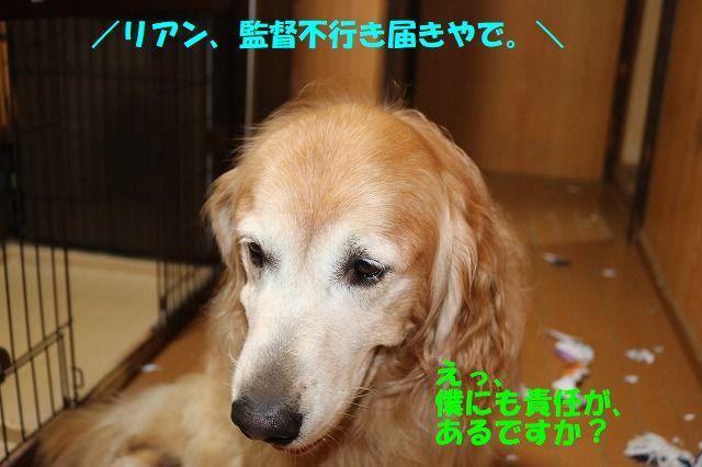 IMG_9731_20170929201800df6.jpg