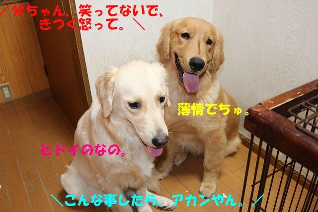 IMG_9736.jpg