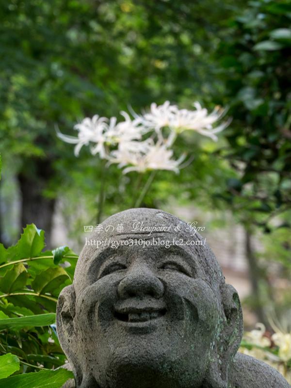 浄慶寺の彼岸花 G