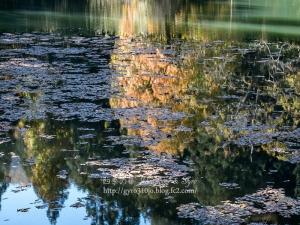 菖蒲池 C