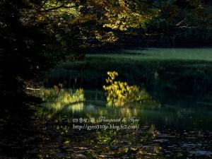 菖蒲池 D