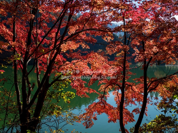南伊奈ヶ湖 G