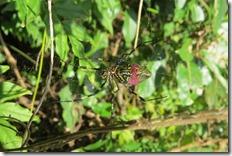 171030029大きなジョロウグモ
