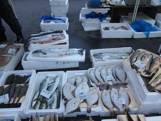 カレイ豊漁