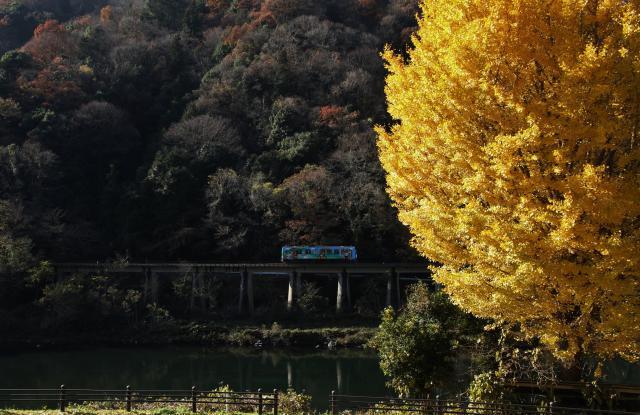 三江線と銀杏