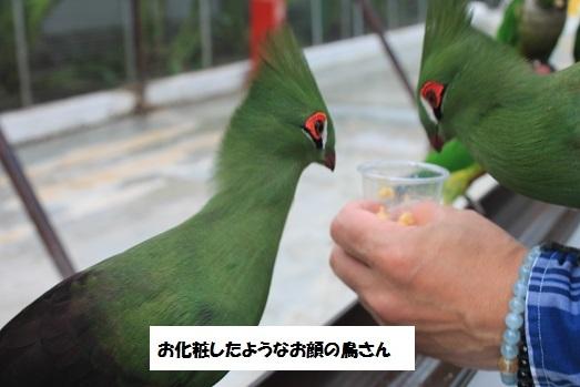 こんな鳥ちゃんも