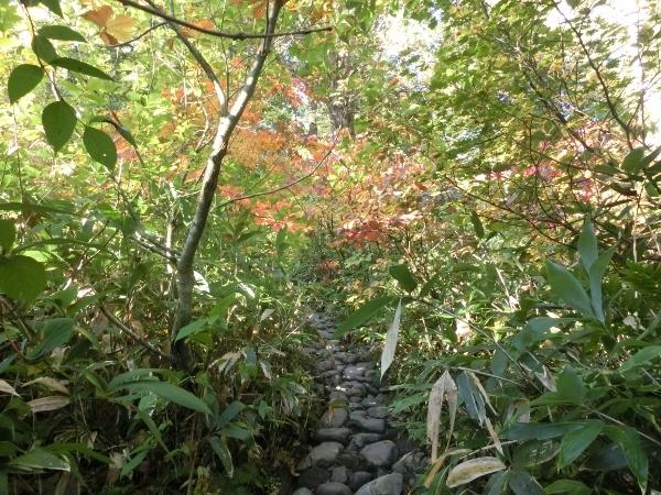 登山口直後の木道