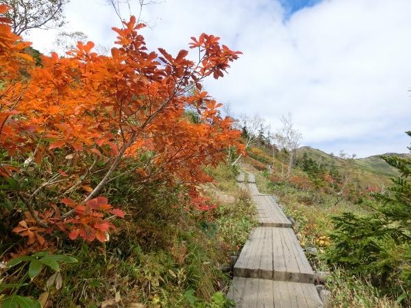 木道脇の赤い木