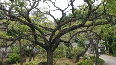杉田の梅林跡