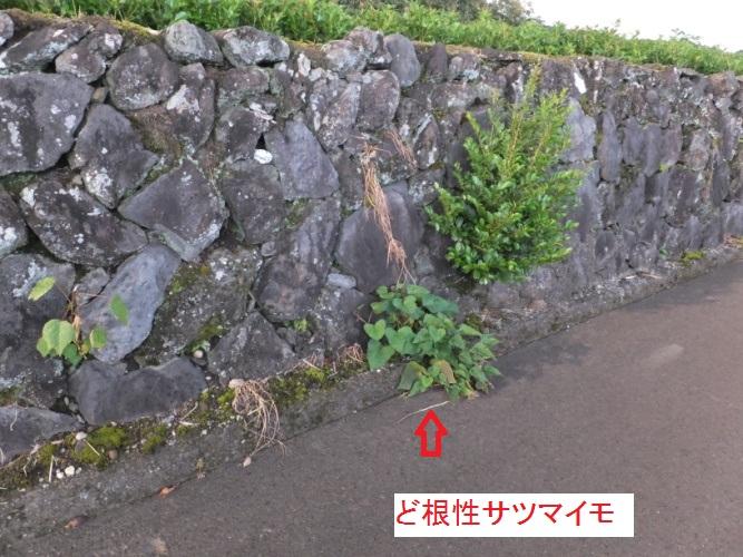 DSCF3060_1.jpg
