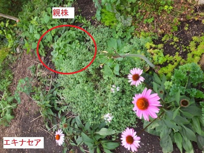 DSCF3067_1.jpg