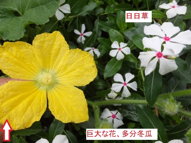DSCF3227_1.jpg