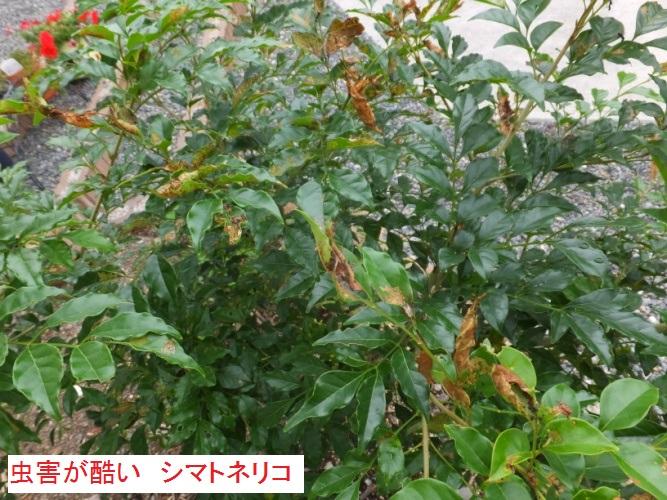 DSCF3231_1.jpg